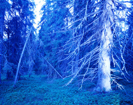 Blåskog1